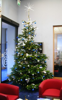 12 foot live tree in blue and silver
