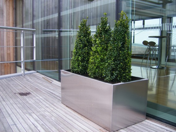 contemporary stainless steel plant pot with buxus