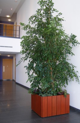 acorn plant displays birmingham 39 s finest office plant