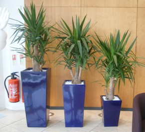 Tall square plant displays in Stoke on Trent